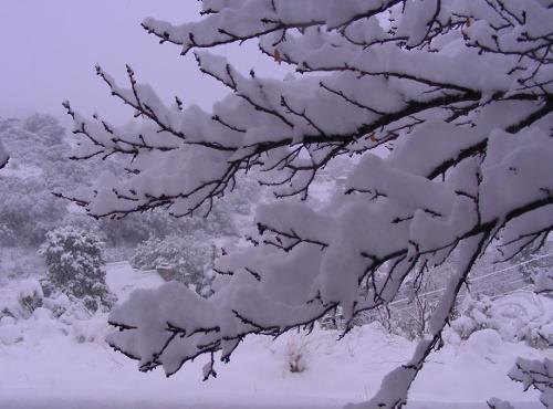 eve_snow-0